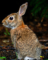 Bunny Rabbit Portrait. Image taken with a Fuji X-T2 camera and 100-400 mm OIS lens
