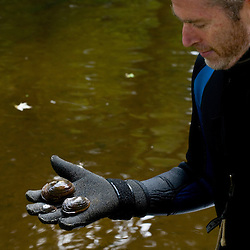 Mussel researcher Ethan Nedeau holds three species of freshwater mussels.  Keene, New Hampshire.  Ashuelot River.