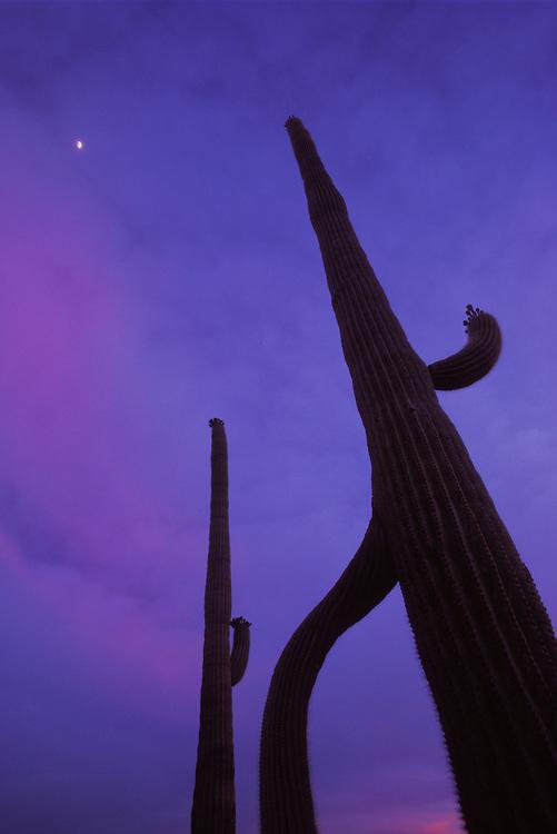 Organ Pipe Cactus National Monument, Arizona.