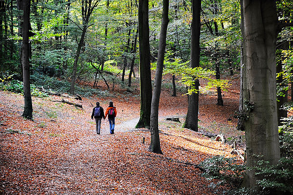 Nederland, Ubbergen, 22-10-2008Herfstbos. Heerlijkheid Beek.Foto: Flip Franssen/Hollandse Hoogte