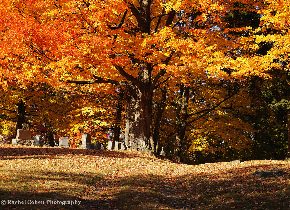 """""""Resting Under Maples"""" <br /> <br /> Beautiful and glorious trees in autumn tower above the headstones in this cemetery!"""