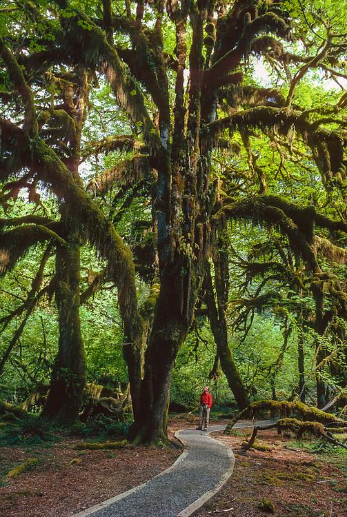 Hall of Mosses, Hoh Rain Forest, Olympic National Park, Washington, USA