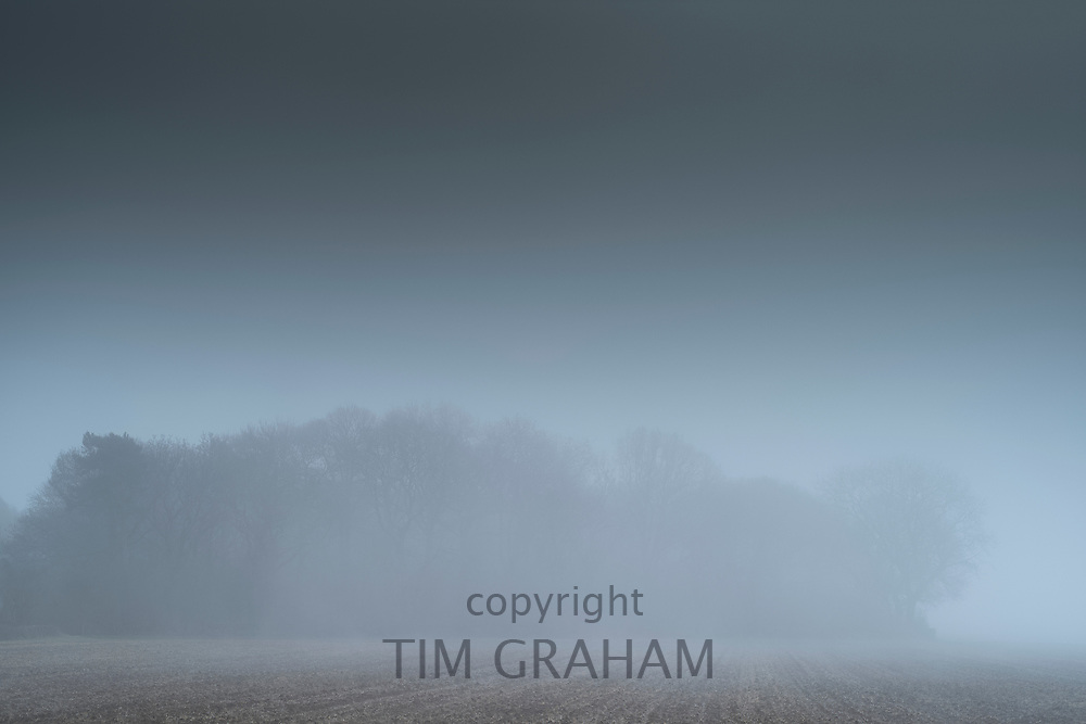 Copse of trees on misty winter morning in The Cotswolds, Oxfordshire, UK