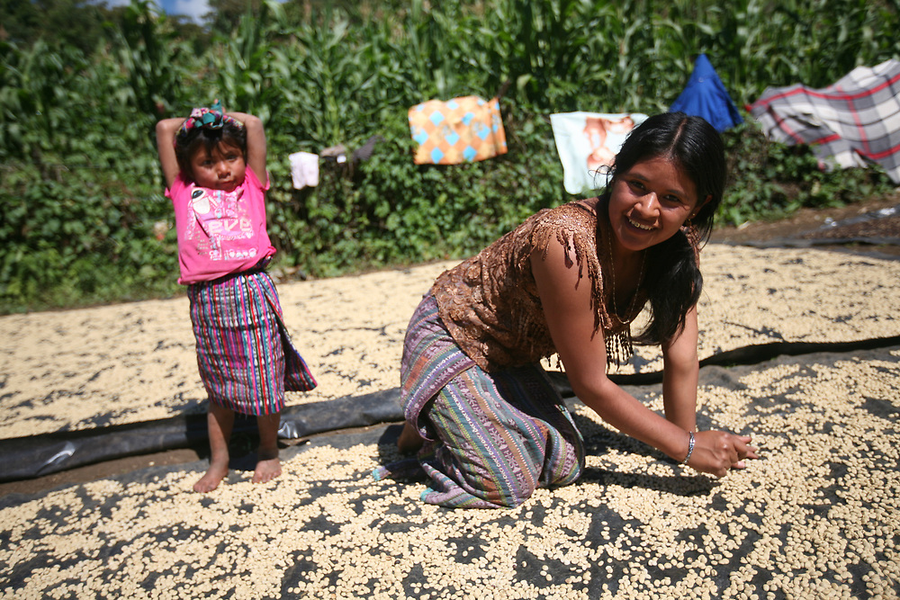 Maria Romalda Marcos Ramírez sorts parchment coffee that is drying on her patio. The coffee goes to the CODECH coop. CODECH is a Fairtrade-certified coffee producer in Concepción Huista, Huehuetenango, Guatemala.