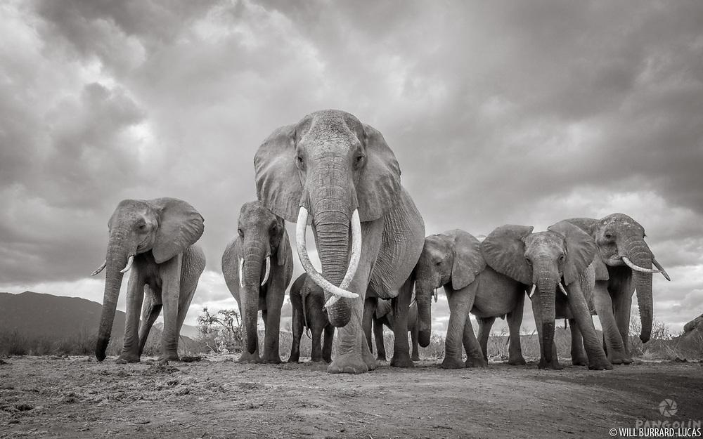 Tsavo, Kenya. Part of the Land of Giants project.
