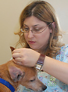 Female vet examines a dog's ear