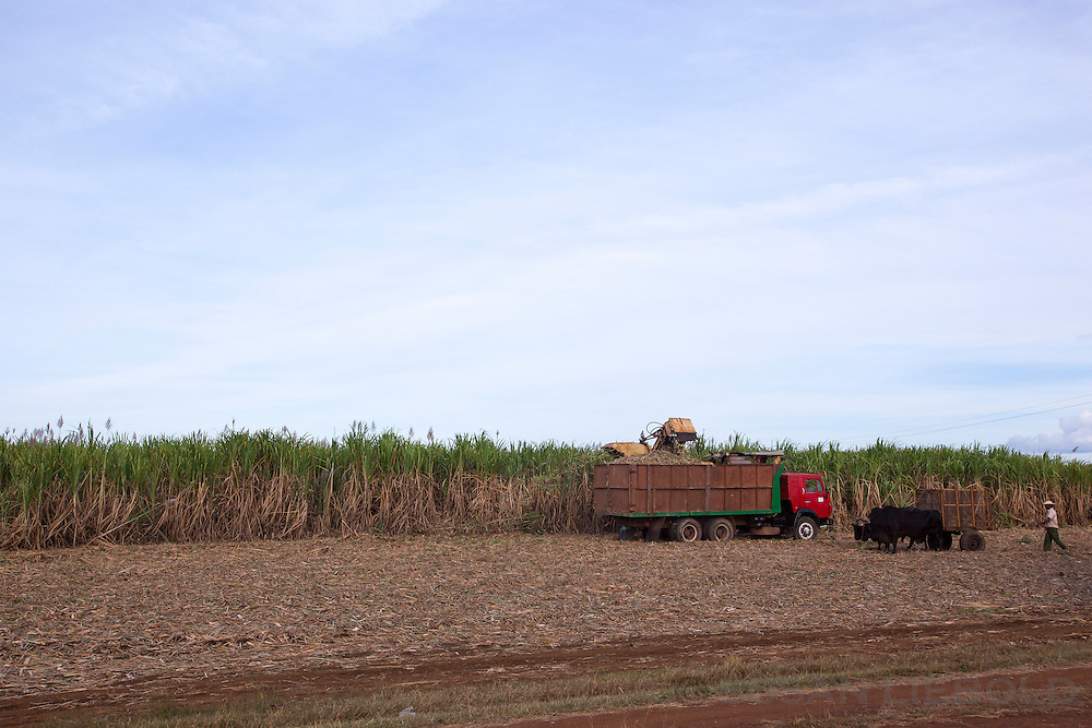 Harvesting sugar cane in Cuba.