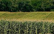Stock shots of corn field near Blair Neb..Photo stock for Ethanol in the Midwest. .(Chris Machian/Prairie Pixel Group)