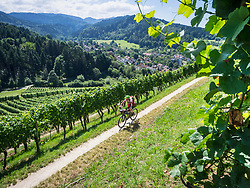 Mountainbiker (M48) riding on a track through vineyards  in the Southern Black Forest, Baden-Württemberg, Germany