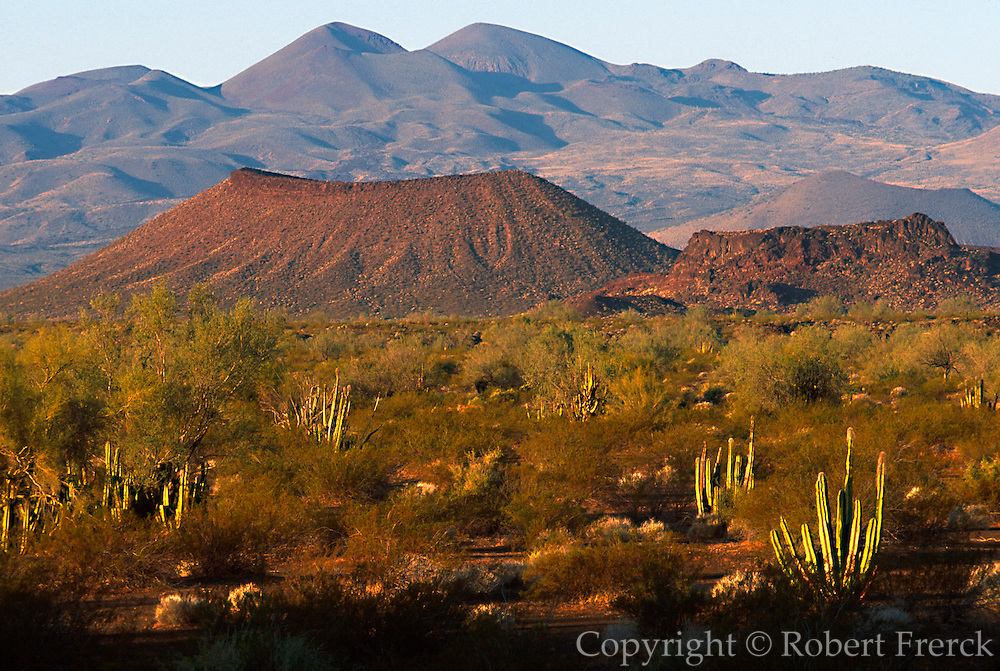 MEXICO, SONORA, SONORAN DESERT Pinacate National Park west of Nogales; volcanic cinder cones and desert foliage