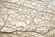 vines growing on a wall of a house looking like a landscape with roads seen from above