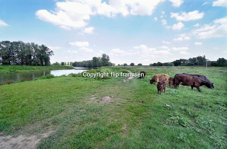 Nederland, Nijmegen, 29-5-2019 Wilde runderen, galloways, grazen langs de Waal .. Natuurbegrazing door het uitzetten van Galloway runderen. De grazers lopen op de oever en houden de begroeing laag en divers. Ze zijn uitgezet en beheerd door de stichting Ark en staatsbosbeheer. Een koe met haar kalf, kalfje . Foto: ANP/ Hollandse Hoogte/ Flip Franssen