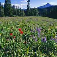 Wildflowers crowd a meadow near Lone Mountain.