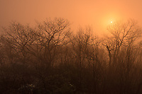 After being surrounded by a very thick fog before sunrise, it finally began to burn off as the sun rose. The light was changing by the second as a warm glow lit up the trees.