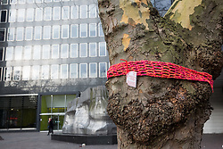 London, UK. 13th January, 2018. A tree in Euston Square Gardens is wrapped with a hand-knitted scarf bearing a message referring to arboricide. Activists opposed to the HS2 high-speed rail link have 'yarn-bombed' many of the mature London Plane, Red Oak, Common Whitebeam, Common Lime and Wild Service trees in Euston Square Gardens expected to be felled to make way for temporary sites for construction vehicles and a displaced taxi rank as part of preparations for the controversial HS2 project in order to draw attention to their fate.
