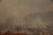 12072017 - Ventura, California USA: The Thomas fire jumps the 101 Freeway in the Faria Beach neighborhood of Ventura, California along the Pacific Ocean, burns a palm tree farm and threatens houses. (Photo by Jeremy Hogan)
