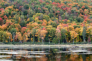 Fall foliage and a beaver lodge at the Beaver Pond in Gatineau Park, Québec, Canada.  Photographed from the Gatineau Parkway during the Fall Rhapsody festival at Gatineau Park.
