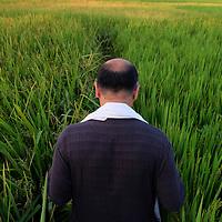 Shatum Seth lead a group through rice fields in Gaya, India during a pilgrimage to Buddhist sites.<br /> Photo by Shmuel Thaler <br /> shmuel_thaler@yahoo.com www.shmuelthaler.com