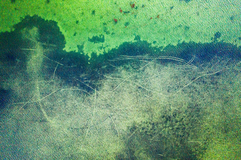 Propeller scars caused by poor boating practices can cut the roots of seagrass meadows causing long-term damage. Image made in the Florida Keys.