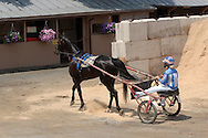 Goshen, NY - A female driver and her horse head back to the barn after a race at Goshen's Historic Track on June 7, 2008.