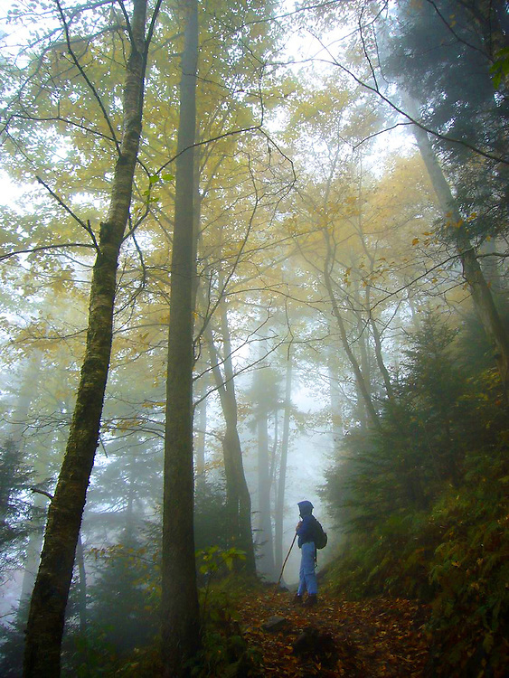 Hiking through the Smokey Mountains in Tennessee on the way to the Mt. Leconte Lodge.
