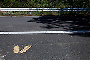 Yellow footprints mark where people should wait to cross a road in the town of Tomioka, Futaba District of Fukushima, Japan. Thursday May 2nd 2013. The town was evacuated on March 12th after the March 11th 2011 earthquake and tsunami cause meltdowns at the nearby Fukushima Daichi nuclear power station. It lies well within the 20 kms exclusion zone though parts of the town have recently been opened again to allow locals to visit their property during daylight hours.
