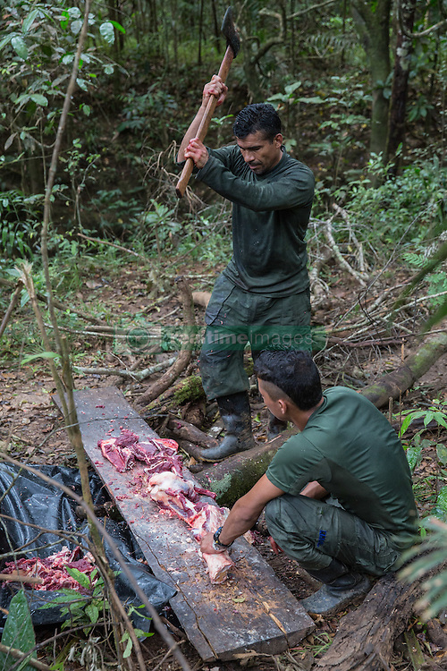 El Diamante, Meta, Colombia - 19.09.2016        <br /> <br /> FARC fighter slaughter a cow in a guerilla camp during the 10th conference of the marxist FARC-EP in El Diamante, a Guerilla controlled area in the Colombian district Meta. Few days ahead of the peace contract passing after 52 years of war with the Colombian Governement wants the FARC decide on the 7-days long conferce their transformation into a unarmed political organization. <br /> <br /> FARC Kaempfer schlachten eine Kuh in einem Guerilla-Camp bei der zehnten Konferenz der marxistischen FARC-EP in El Diamante, einem von der Guerilla kontrollierten Gebiet in der kolumbianischen Region Meta. Wenige Tage vor der geplanten Verabschiedung eines Friedensvertrags nach 52 Jahren Krieg mit der kolumbianischen Regierung will die FARC auf ihrer sieben taegigen Konferenz die Umwandlung in eine unbewaffneten politischen Organisation beschlieflen. <br />  <br /> Photo: Bjoern Kietzmann