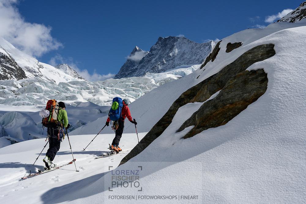 Zwei Skibergsteiger auf dem Unteren Grindelwaldgletscher mit dem Finsteraarhorn und dem Agassizhorn im Hintergrund, Grindelwald, Berner Oberland, Schweiz<br /> <br /> Two ski mountaineers on the lower Grindelwald glacier with the Finsteraarhorn and the Agassizhorn in the background, Grindelwald, Bernese Oberland, Switzerland