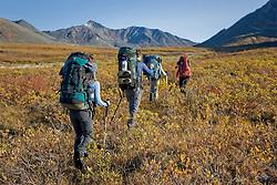 Hiking trip in Tombstone Territorial Park, Yukon in late summer