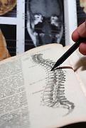 An open Anatomy text book