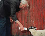 Hill farmer, John Rayner feeds a pet Swaledale lamb at his farm in Nidderdale, North Yorkshire, UK.