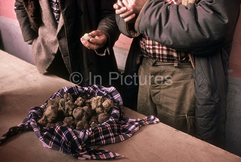 "Truffle hunters and sellers in Alba market, the italian capital of the truffle, the ""tartufo""."