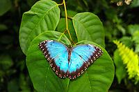 Sweden, Solna, Haga Park. Butterfly House.
