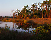 Southern pines reflected in Whiskey George Creek, Tate's Hell State Forest, Florida.