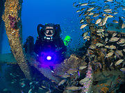 KISS rebreather scuba diver and tropical Grunt fish school on the USAUSCGC Spar Shipwreck in North Carolina, USA