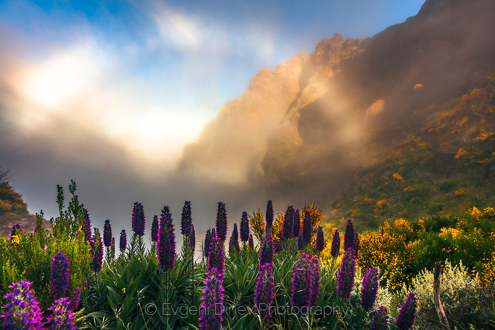 Violet flowers high in mountain