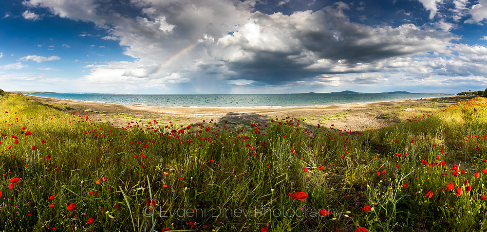 Stormy sky with a rainbow and poppies by the sea shore