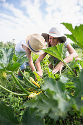 Mid adult woman with her son harvesting courgette in community garden, Bavaria, Germany
