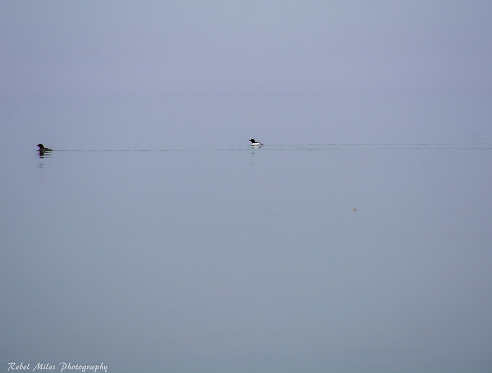 Gray Skies Meld With Still Water