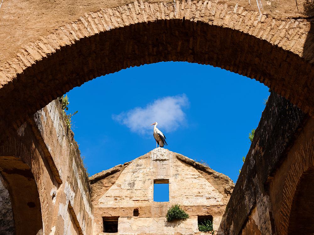 RABAT, MOROCCO - CIRCA MAY 2018: Stork at the Chellah, an ancient citadel featuring Roman ruins an royal tombstones in Rabat.
