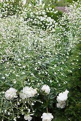 Crambe cordifolia with Paeonia lactiflora 'Duchesse de Nemours'