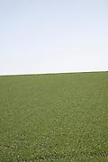 Green field and blue sky, Suffolk farming landscape scenery, East Anglia, England