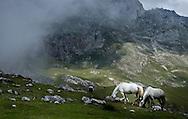 Mountain Horses, Picos de Europa, Cantabria Northern Spain.