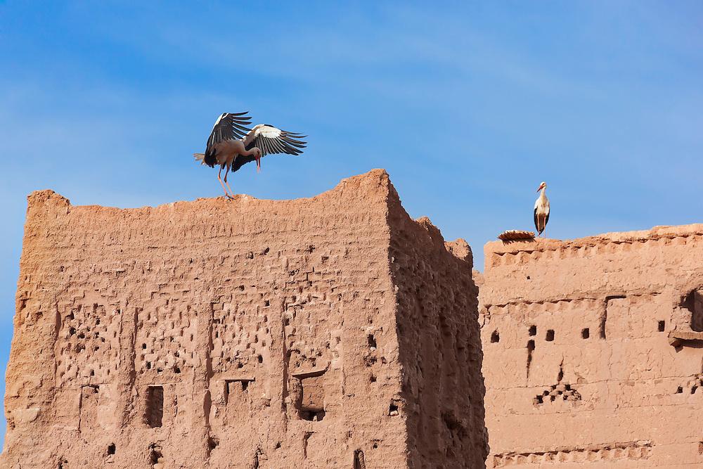 Storks on top of the Stork Kasbah in Ouarzazate (Kasbah des Cigognes).