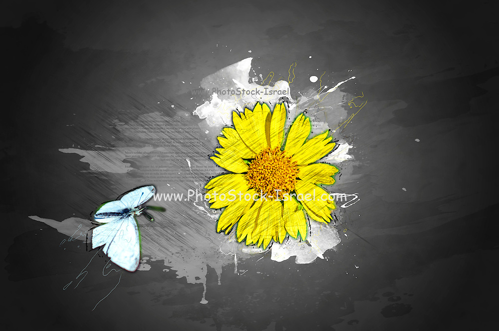 Digitally manipulated image of a white butterfly and yellow flower