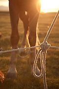 Tethered horse on the jailoo (summer pasture) near the south shore of lake Song Köl, Kyrgyzstan