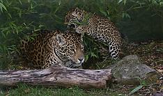 Paradise Zoo cub