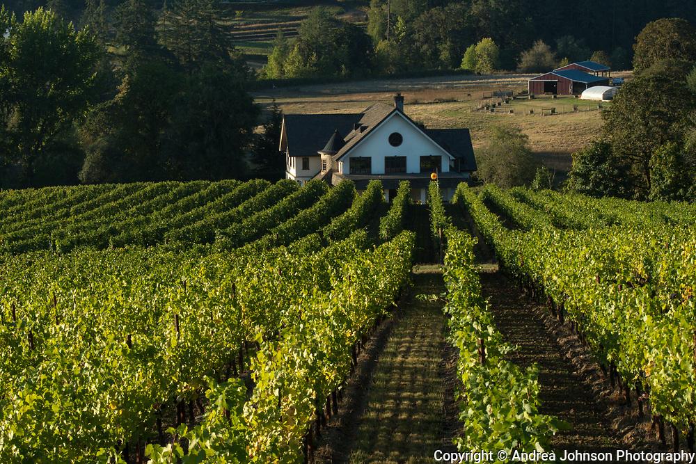Beacon Hill harvest, Yamhill-Carlton AVA, Willamette Valley, Oregon
