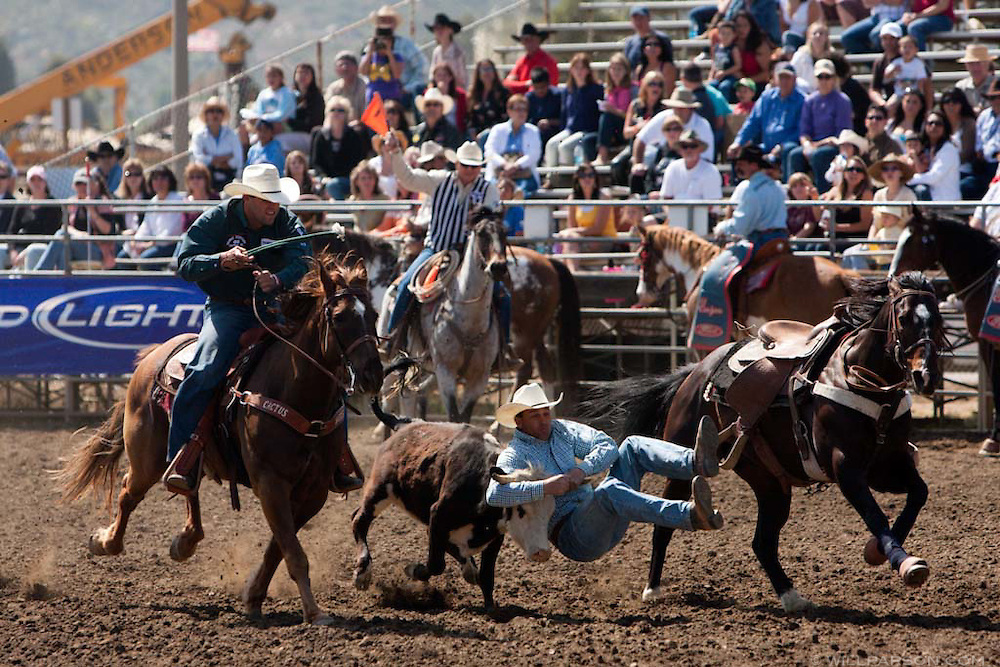 Ethan Thouvenell scores 7.5 seconds in the steer wrestling at the Lakeside Rodeo on April 25, 2009.