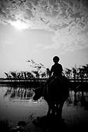 Silhouette of a young Vietnamese boy riding his buffalo in a river, Hue area, Vietnam, Southeast Asia